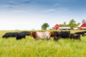 Farm with Cows.jpeg
