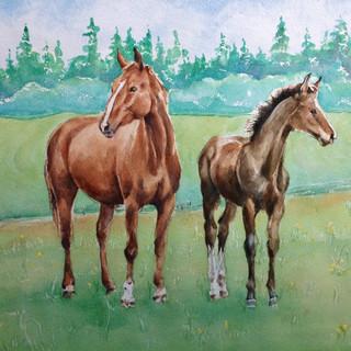 Richard's Horses