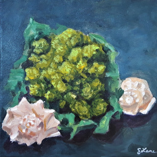 Romanesco and shells