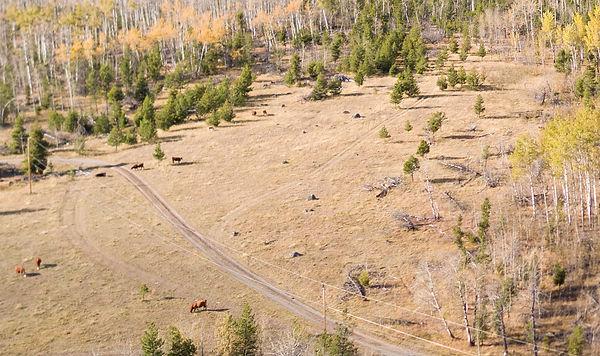 FFD Aerial Cows.jpg