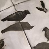 Birds-A