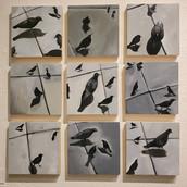 9 bird set