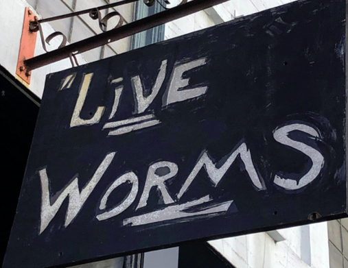 Live Worms Gallery Sign