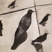 Birds-E
