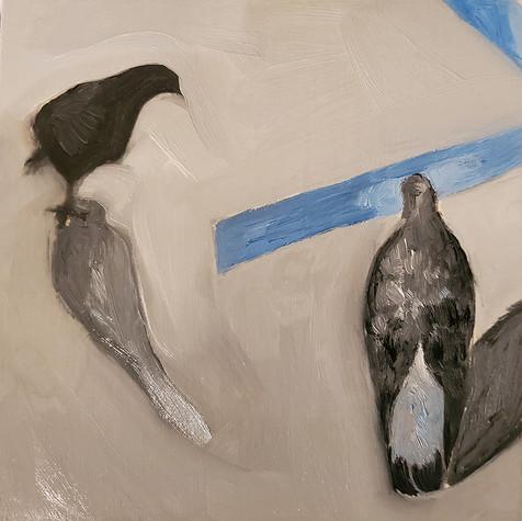 Small pigeons 1