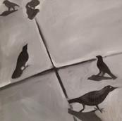 Birds-F