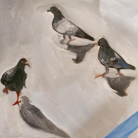 small pigeons 2
