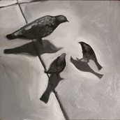 Birds H