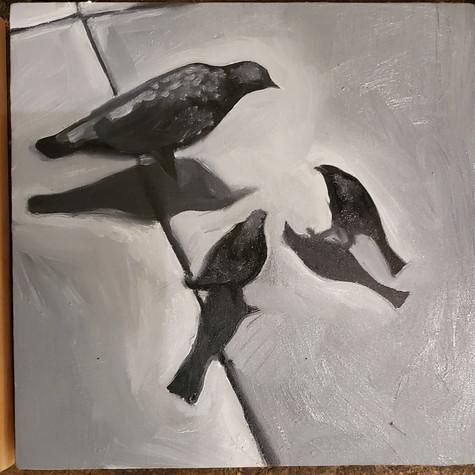 Birds 9