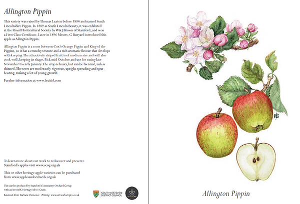 Allington Pippin card
