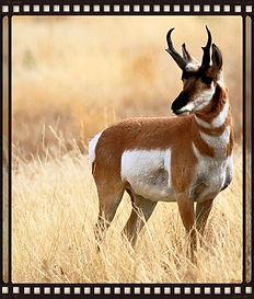 Antelope Acres Town Council