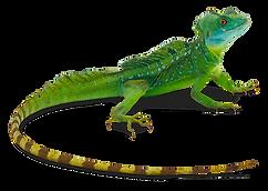 kisspng-greater-short-horned-lizard-rept