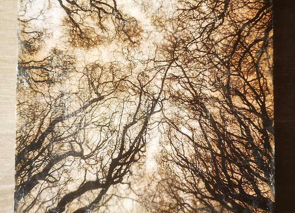 Bedham Woods 3, West Sussex - Encaustic Photography