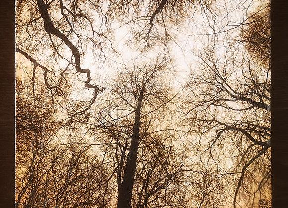 Bedham Woods 2, West Sussex - Encaustic Photograph