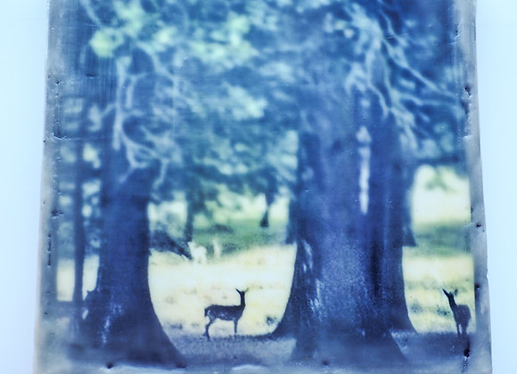 Petworth Park 1 - Encaustic photography - Limited edition SOLD