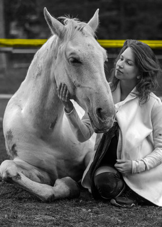 My lovley horse