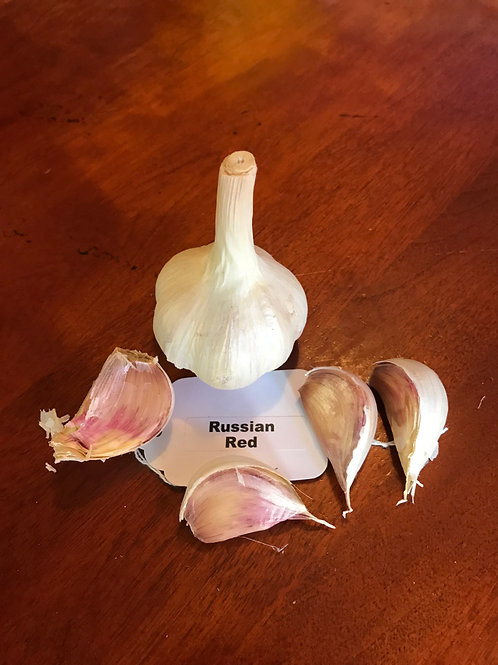 Hardneck Garlic Sampler Pack (Sold out for 2019)