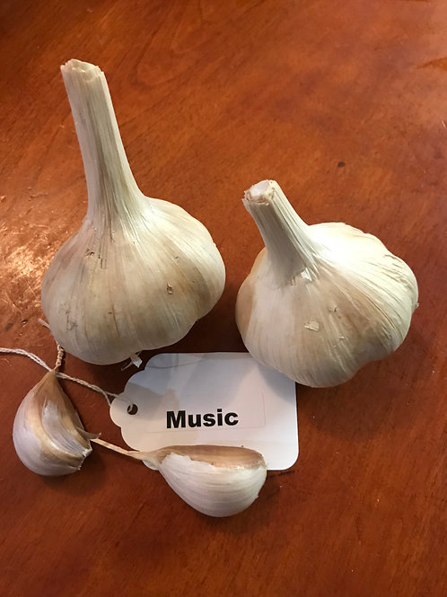Music Garlic