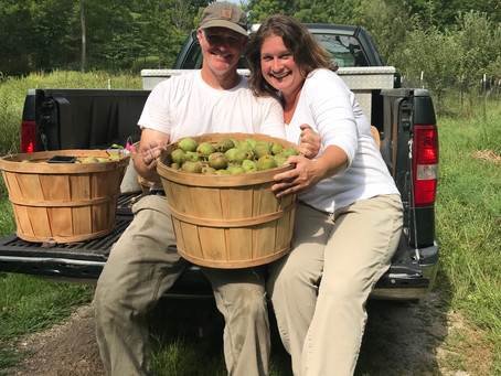 Pear Harvest 2019!