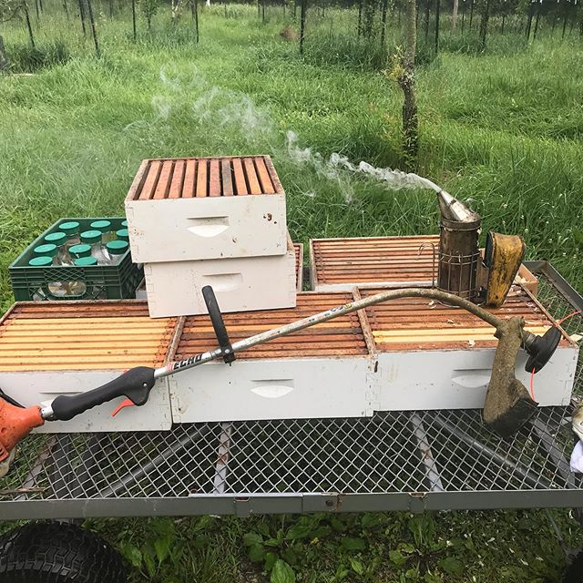 Going to the Apiary to do hive inspectio