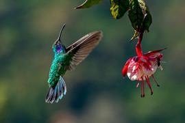 Costa Rica 2019  043.jpeg