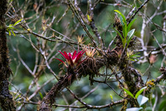 Costa Rica 2019  021.jpeg
