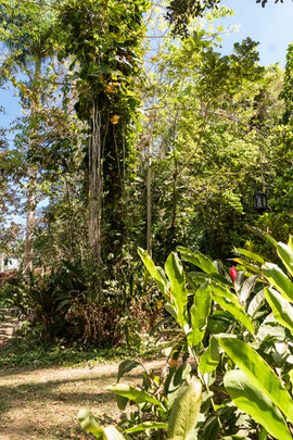 Reis Cuba 041.JPG