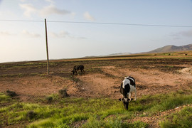 Kaapverdië 2007 026.jpg