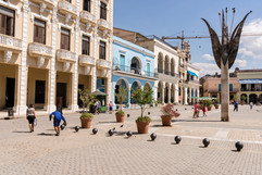 Reis Cuba 024.JPG