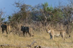 Reis Afrika037.JPG