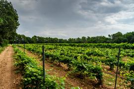 Provence 2013  048.jpeg