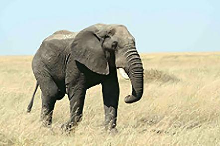 elefante modelo 3d antes da montagem.jpg