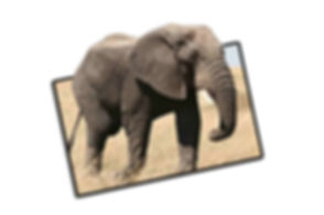 elefante modelo 3d.jpg