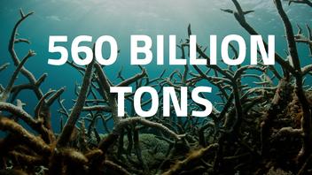 Save The Phytoplankton