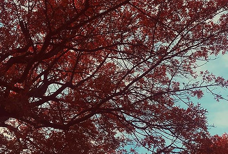 Burning red 🍁