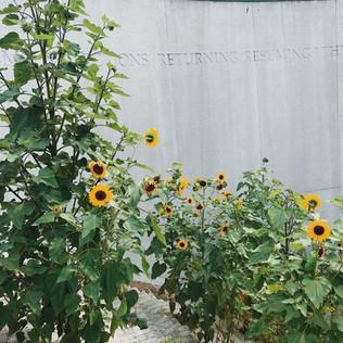 Dupont metro station escalator summer sunflowers