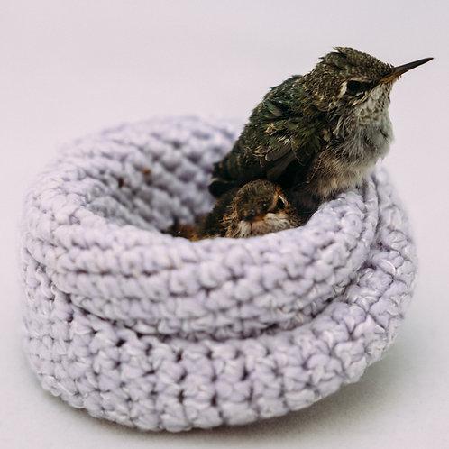 Sponsor a Species: Hummingbird