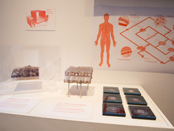 The Wyss Institute for Biologically Inspired Engineering