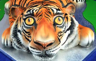 Tiger face close up.jpg