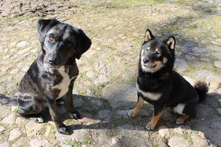 Die Hündinnen Enya und Yuka