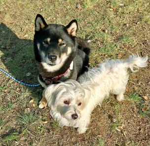 Die Hündinnen Yuka und Abby