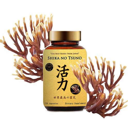 SHIKA NO TSUNO - LINH CHI SỪNG HƯƠU