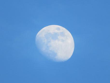 日中のお月様です。
