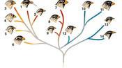 14. Darwin et l'évolution des espèces