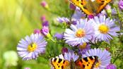 54. Le cycle de vie des plantes à fleurs