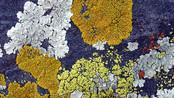 10. Mousses et lichens