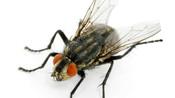 6. Le rôle des insectes dans les enquêtes criminelles