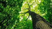 9. J'apprends à reconnaître les arbres