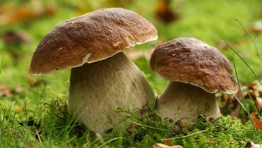 8. Les champignons