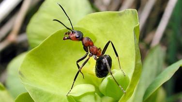5. Les insectes et autres invertébrés